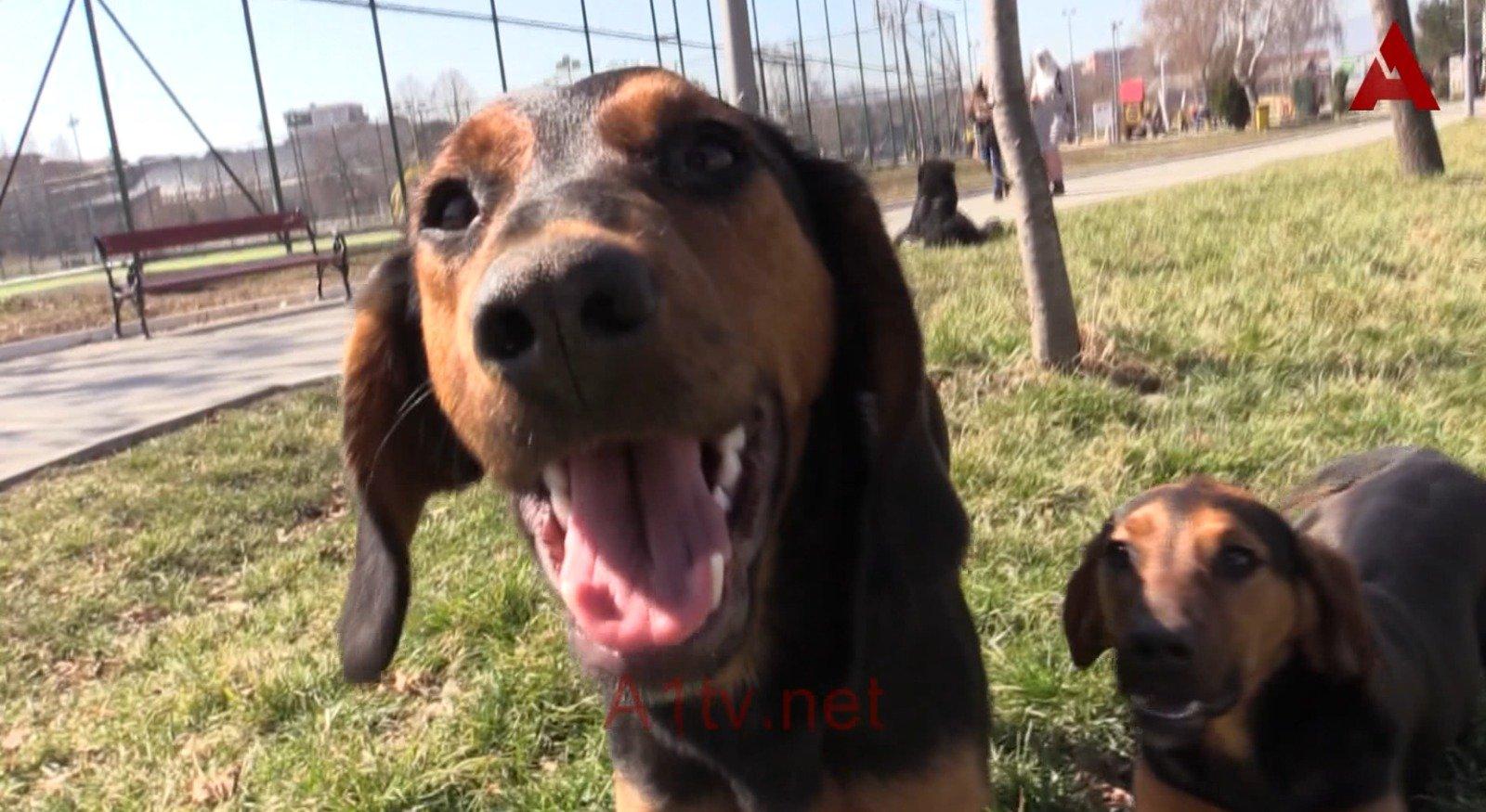 Vlasnik psa demantovao navode medija (video)