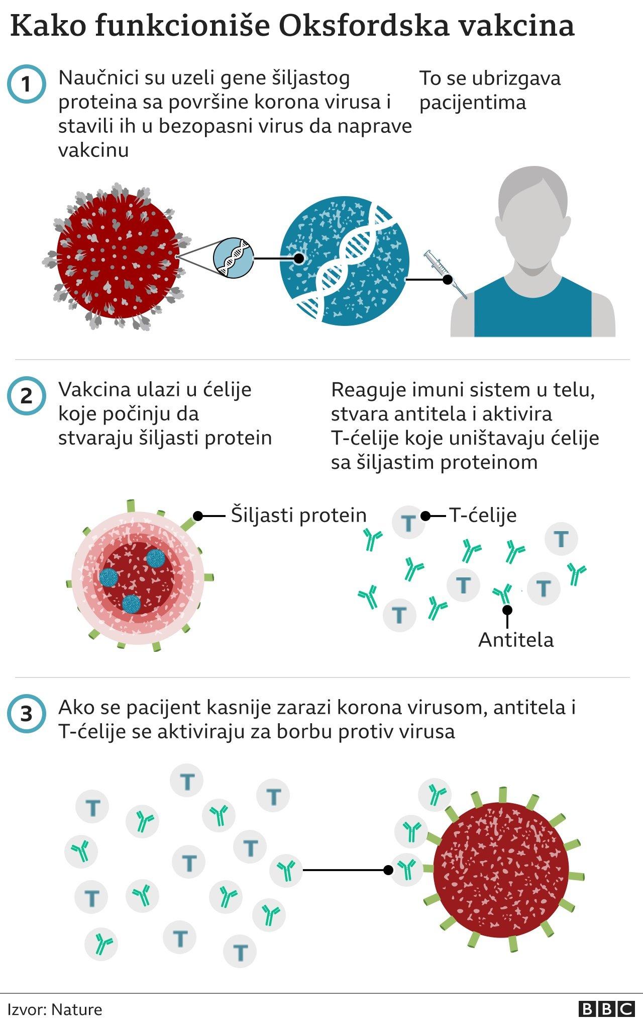 Kako funkcioniše vakcina