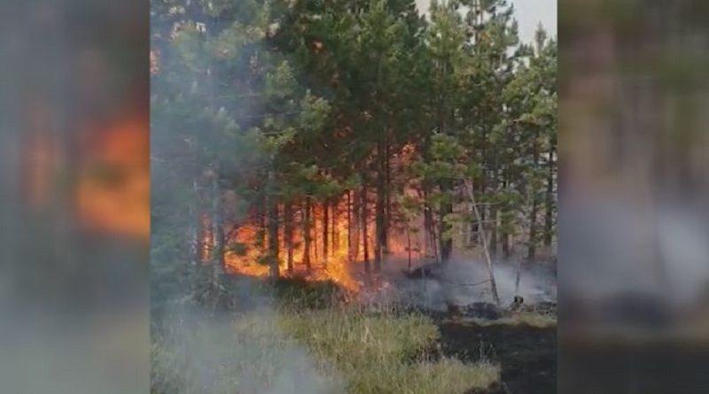 MUP: Nema otvorenog plamena od požara u šumi kod Nove Varoši